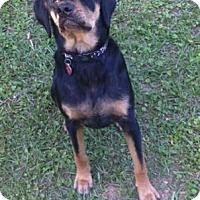 Adopt A Pet :: Jasper - Columbia, SC