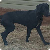 Adopt A Pet :: Gracie - Daleville, AL