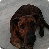 Adopt A Pet :: Teddy - Kemp, TX
