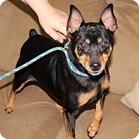 Adopt A Pet :: Joe Joe - Syracuse, NY