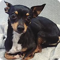 Adopt A Pet :: Courtesy Post - Fancy - Wilmington, DE