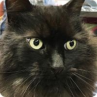 Adopt A Pet :: Valerie - Clayville, RI
