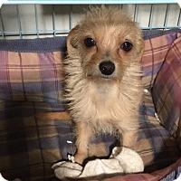 Adopt A Pet :: Gumdrop - La Quinta, CA