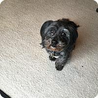 Adopt A Pet :: Bentley - Catharpin, VA