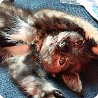 Adopt A Pet :: Cleopatra - Trenton, NJ