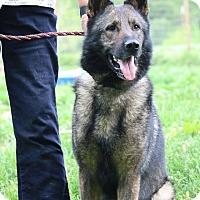 Adopt A Pet :: Reuben - Greeneville, TN