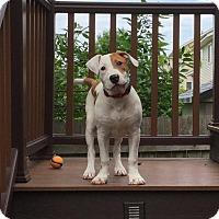 Adopt A Pet :: Leonard - Lakeville, MN