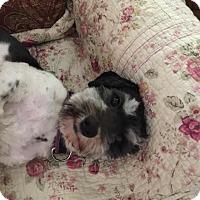 Adopt A Pet :: Chauncey - Lodi, CA