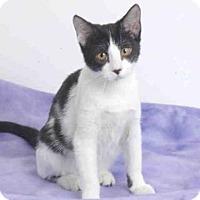 Adopt A Pet :: A568654 - Oroville, CA