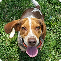 Adopt A Pet :: Mika - Lisbon, OH
