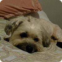 Adopt A Pet :: Joe - Pittsburgh, PA