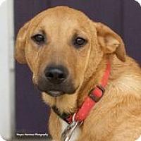 Adopt A Pet :: Summit - Norwich, CT