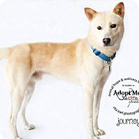 Adopt A Pet :: Journey - Denver, CO