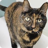 Adopt A Pet :: Honeybun - Medina, OH