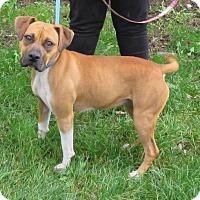 Adopt A Pet :: Zadie - Elkins, WV