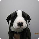 Adopt A Pet :: Baby Oatmeal