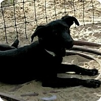 Adopt A Pet :: CeeCee - Roanoke, VA