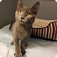 Adopt A Pet :: Grace - Glendale, AZ