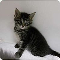 Adopt A Pet :: Cheeto - Maywood, NJ
