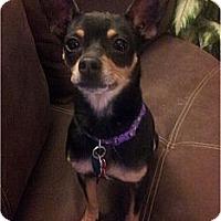 Adopt A Pet :: Dillon - Saved From Death Row - Villa Rica, GA