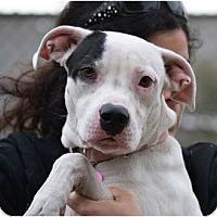 Adopt A Pet :: Ella - Phoenix, AZ