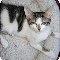 Adopt A Pet :: Lilly - Mount Laurel, NJ