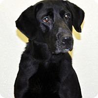 Adopt A Pet :: Breyer - Port Washington, NY