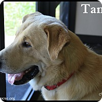Adopt A Pet :: Tanner - Rockwall, TX