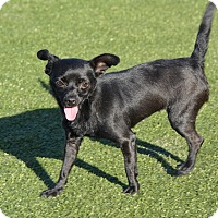 Adopt A Pet :: Nancy - Meridian, ID