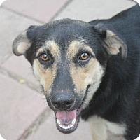 Adopt A Pet :: CORY - Sebec, ME