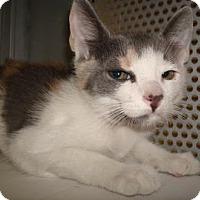 Adopt A Pet :: Claire - Miami, FL