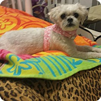 Adopt A Pet :: Gracie@DogGoneSmart - Norwalk, CT