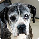Adopt A Pet :: Ashlie