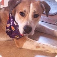 Adopt A Pet :: ROCKY - MINNETONKA, MN