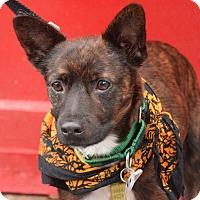 Adopt A Pet :: Sean Penn - Jersey City, NJ