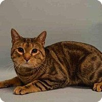 Adopt A Pet :: Stan - New York, NY