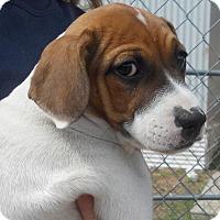 Adopt A Pet :: Ceila - Siren, WI