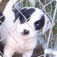 Adopt A Pet :: Panda - Waller, TX