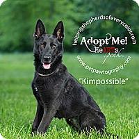 Adopt A Pet :: Kim Possible - Montgomery, AL