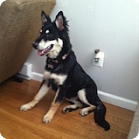 Adopt A Pet :: Gracie - Baltimore, MD