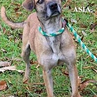 Adopt A Pet :: Asia - Cookeville, TN