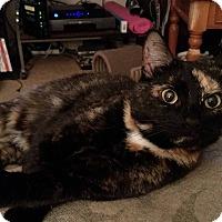 Adopt A Pet :: Candi - Hopkinsville, KY