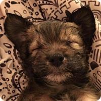Adopt A Pet :: Ruff and Rowdy - Trenton, NJ