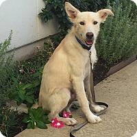 Adopt A Pet :: Bing - Austin, TX