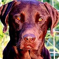 Adopt A Pet :: DULLAS(WHAT A STORY--PLS READ! - Wakefield, RI