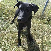 Adopt A Pet :: RODY - Cleveland, MS