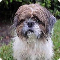 Adopt A Pet :: JUNO - West Palm Beach, FL