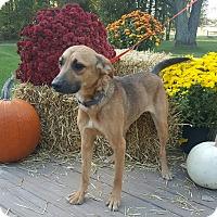 Adopt A Pet :: Maggie - Oakland, MI