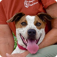 Adopt A Pet :: Chase - Payson, AZ