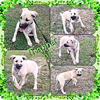 Adopt A Pet :: Trapper pending adoption - Manchester, CT